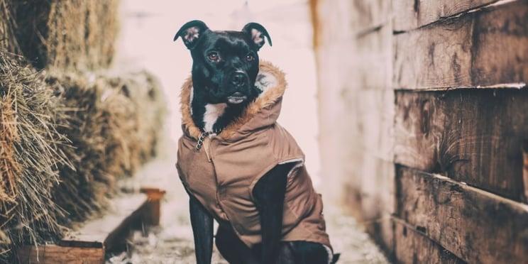 dog_waiting_in_alley.jpg