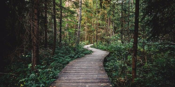 trees_on_walking_trail.jpg
