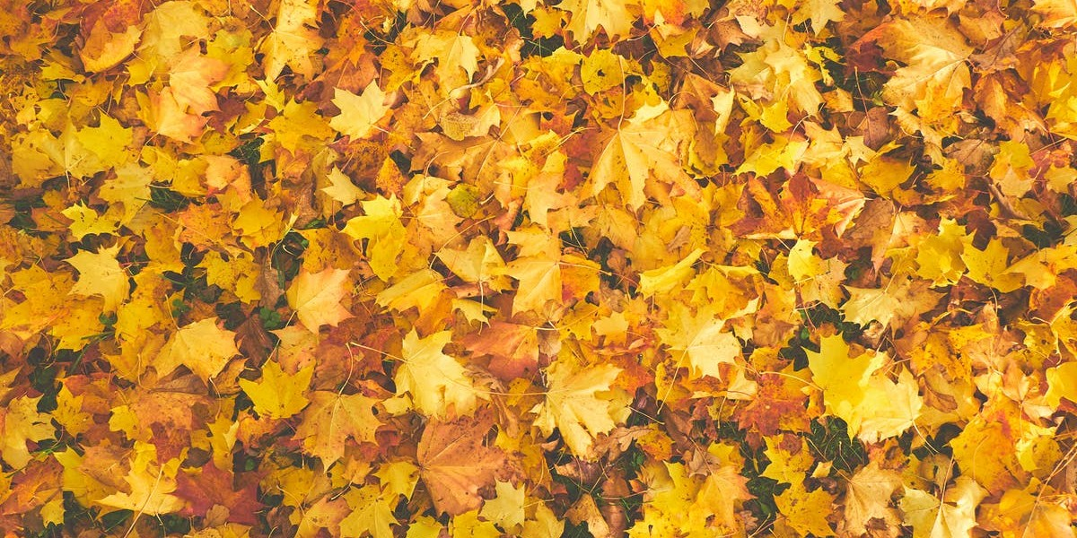 7 People Who Are Talking About Fall Safety Tips